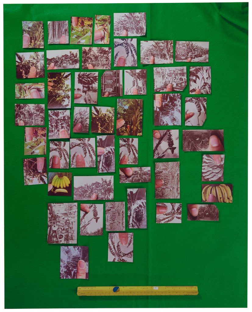 Sara Cwynar, <i>Encyclopedia Grid (Bananas)</i> (2014). Courtesy of the Solomon R. Guggenheim Museum, New York.