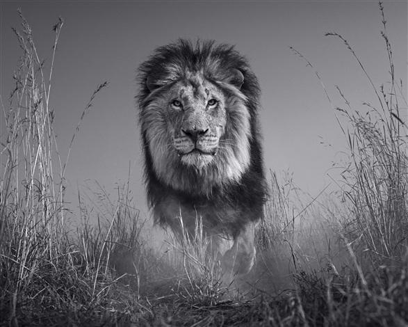 David Yarrow, The King and I (2016). Courtesy of Camera Work.