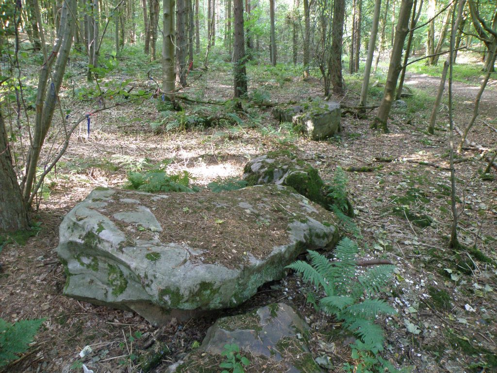 A sarsen, like the ones at Stonehenge, in the West Woods, now known to be the origin of the prehistoric monument's massive stone slabs. Photo by Katy Whitaker, courtesy of Historic England/the University of Reading.